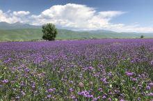 新疆自驾之旅第八日