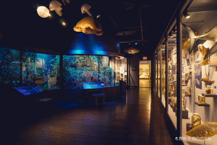 Museum of Comparative Zoology2