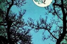 🎑中秋明月