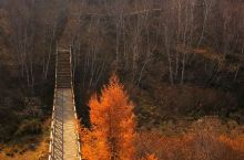 """丰宁坝上不只是草原 ,""""七彩森林""""秋意正浓。在这里没有嘈杂,"""
