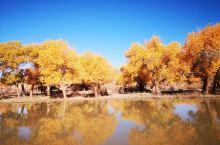 心在远方,眼在天堂~~额济纳胡杨林去寻秋