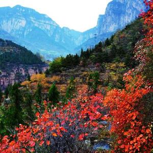 河南蒙古族自治县游记图文-11月旅行攻略,这十个目的地景色撩人,一定不容错过!