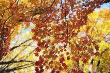 一路饱和色的秋日北海道大学