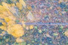 秋天就去喀纳斯看白桦林吧!!