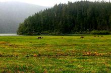 遇见香巴拉--普达措国家森林公园