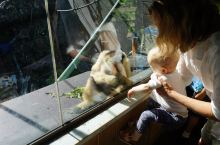 墨尔本动物园,像孩子一样去游玩