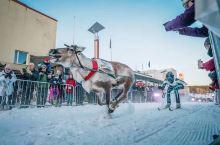 激动人心,亲身体验芬兰赛鹿节