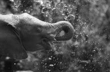 来非洲你应该先去看看大象孤儿院