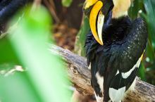 热带跨年,带孩子去看雨林里的神奇动物