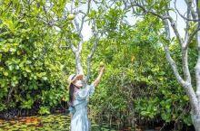巴瓦故居花园:让钢筋水泥变成莫奈花园