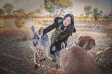 在Alice Springs小袋鼠保护基地遇见你