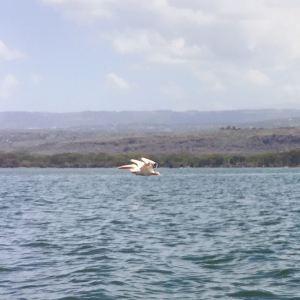 奈瓦沙湖旅游景点攻略图