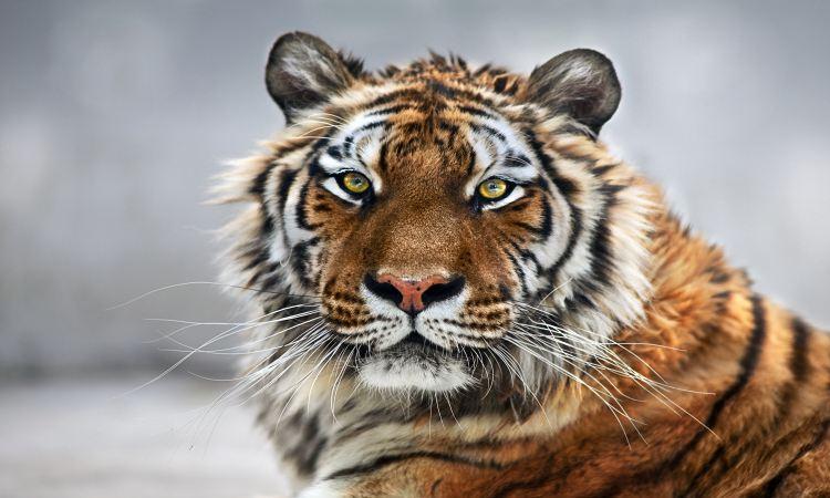 Ecology Zoo2