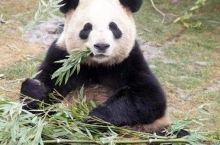 原价¥150,现价¥99!南通森林野生动物世界一票畅玩一整天!