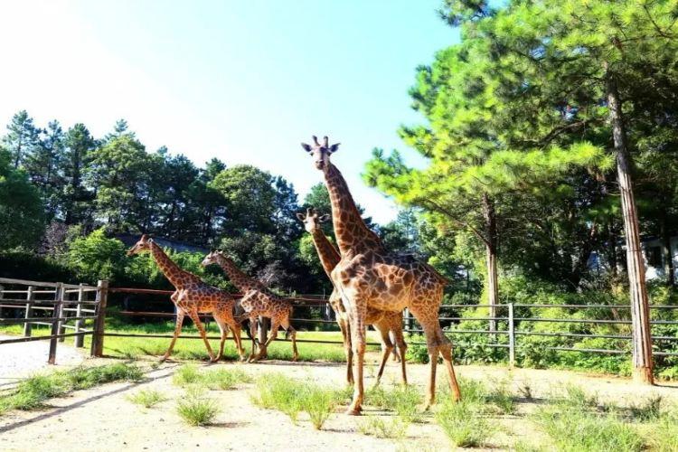 長沙生態動物園3
