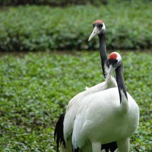 丹顶鹤生态园旅游景点攻略图