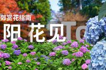 梅雨季的浪漫,关东&关西近郊绣球花最佳赏花景点!