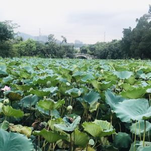 洪湖公园旅游景点攻略图