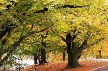 打卡小众英国精致景点巴斯亚历山大公园     巴斯位于英格兰西南部,是英国唯一被列入世界文化遗产的城
