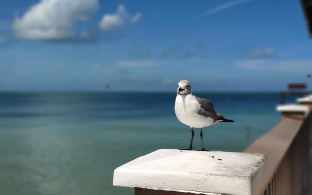 奥兰多小众玩法——美国前十沙滩清水湾Clearwater