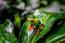 哥斯达黎加的私人动物园为什么会存在,只因导游服务太毒