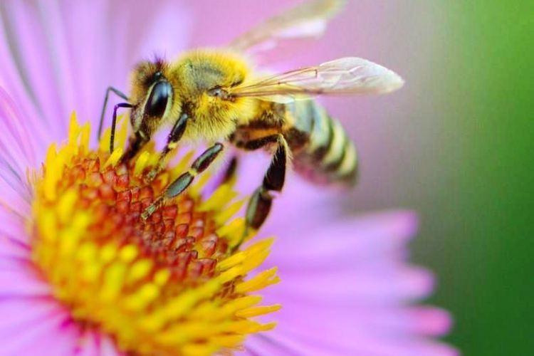 玉蜂穀養蜂園