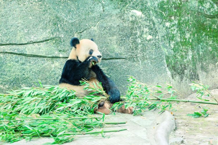重慶動物園