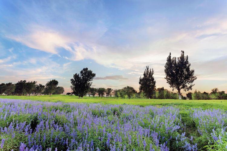 Purple Valley Eden