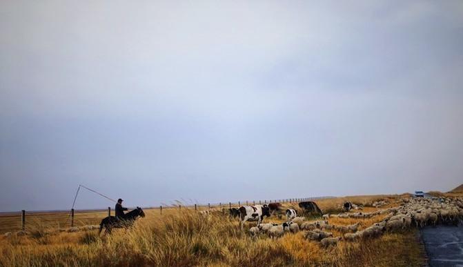 呼伦贝尔大草原 一万个人眼中有一万种呼伦贝尔大草原的秋 – 呼伦贝尔游记攻略插图68