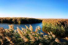 #网红打卡地#居延海湿地美景