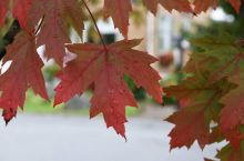 加拿大蒙特利尔的秋天