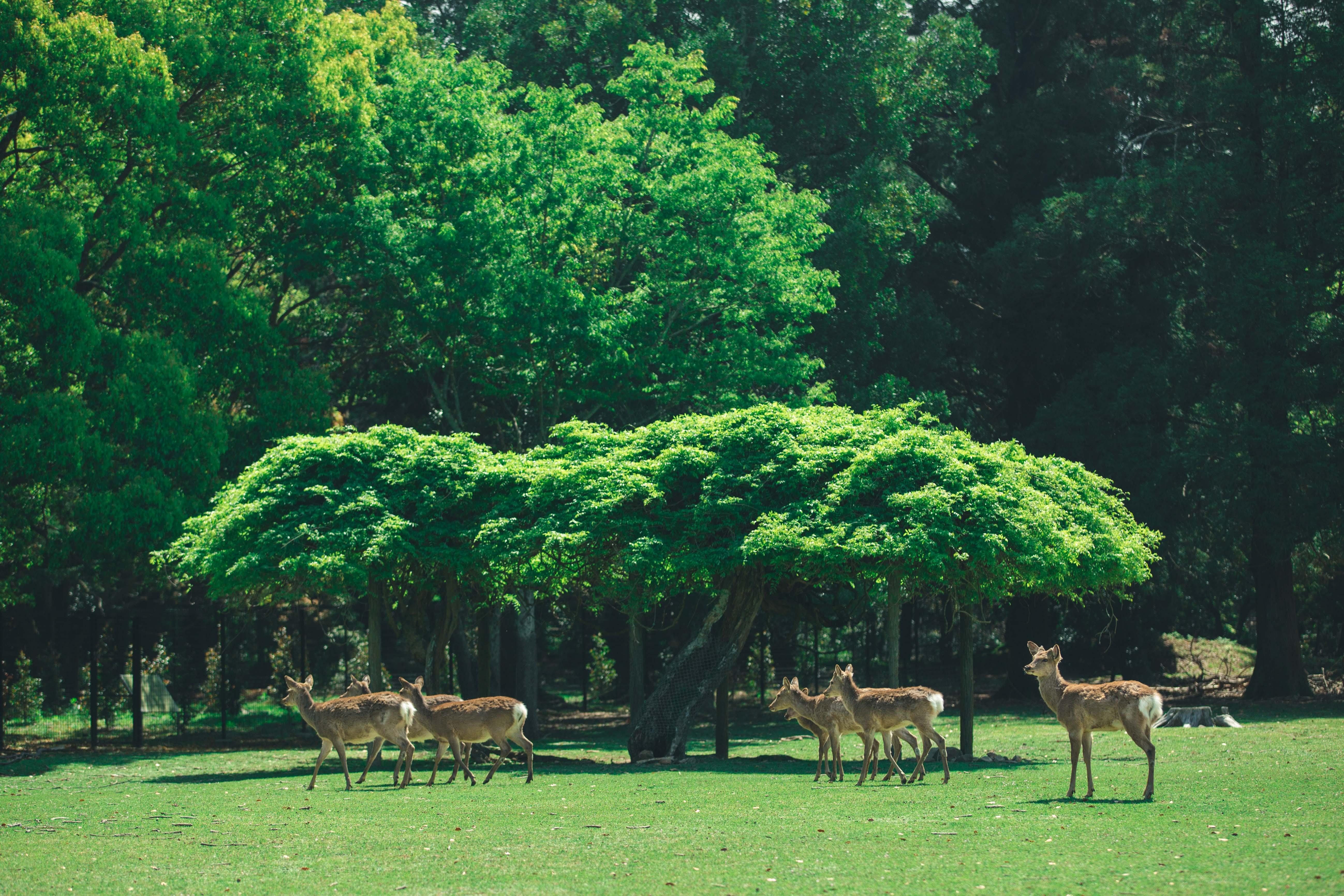 万叶植物园