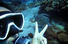 在绿岛潜水才是正经事儿,盘点绿岛8家潜店
