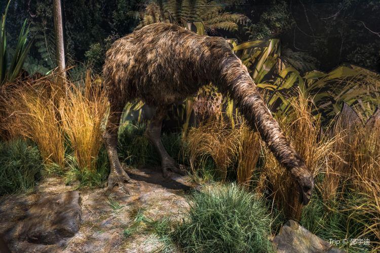 紐西蘭國家博物館3