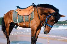 青澳湾沙滩玩乐