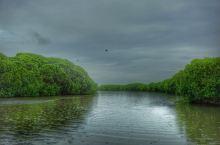 在尼甘布瀉湖来一场原生态之旅