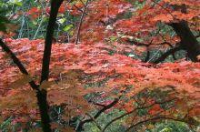 青山沟十一红叶图