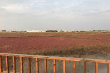 金秋红海滩游记