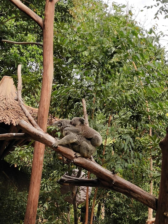 广州小树熊_广州长隆野生动物园亲子一天游 - 广州游记攻略【携程攻略】