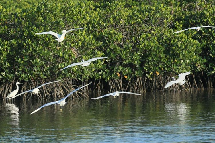 東寨港紅樹林保護区1