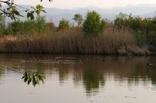 湿地深处春色