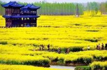 千岛采花黄