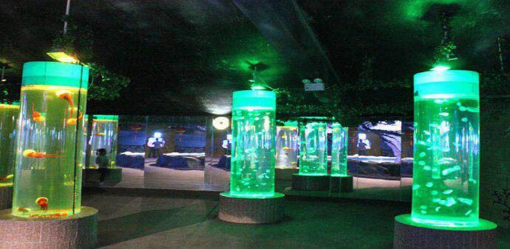 Shijiazhuang Zoo Aquarium3