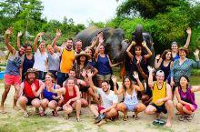 不想骑大象?只想和大象玩,大象保护营了解一下!