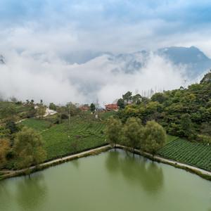 文县游记图文-甘肃陇上江南 碧口马家山也是极品龙井产地