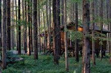 密林小木屋
