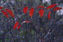 梅湖,雨中观斑斓的秋叶