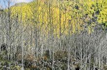 湖南·炎陵酃山 久雨天晴,邀上三五好友,一起去乡下晃晃,呼吸新鲜空气,吃上一点农家菜,散散步。幸福的