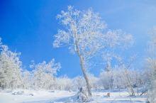 冬季去赏雪   东北的百里雾凇真叫美出了天际