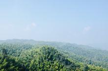 #元旦去哪儿#走近120平方公里的竹林是什么样的感受?